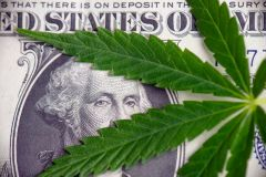 Cannabis Industry Companies Investment Cannabis Industry Tech