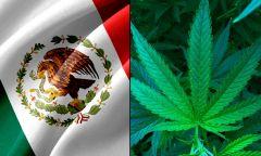 Senate Cannabis Marijuana Morena Party Bill Floor