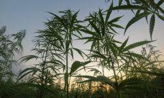 Bill Marijuana Committee Patients Cannabis Legislation