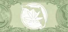 Cannabis State Florida Sales Jobs Center Square