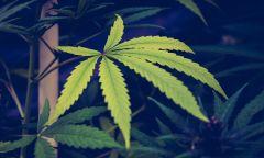 New York Marijuana Bill Legalization Cannabis Law