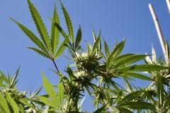 Marijuana North Dakota Legalization Bill Cannabis Ounce