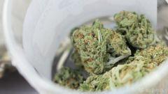 Tax Percent Marijuana Legalization Cannabis Year
